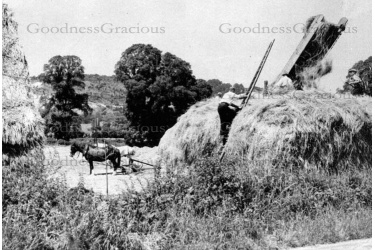 bet_408_haymaking_old_road-kiln_lane16a-24