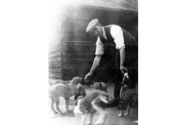 bet_447_bill_balaam_with_puppies