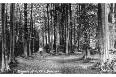 rei_54_the_beeches_1943